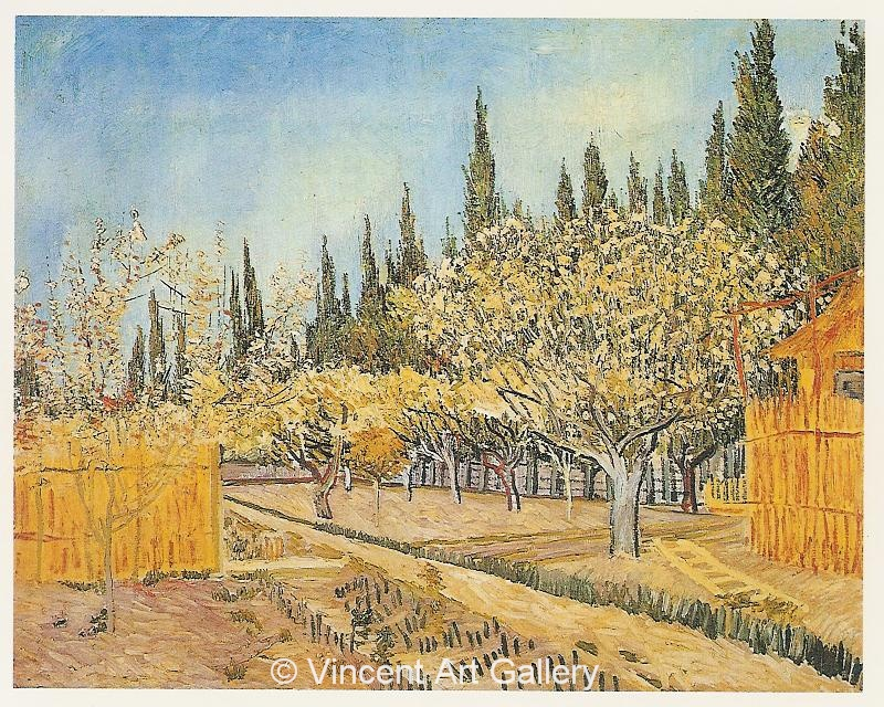 JH1389, Orchard in Blossom, Bordered by Cypresses